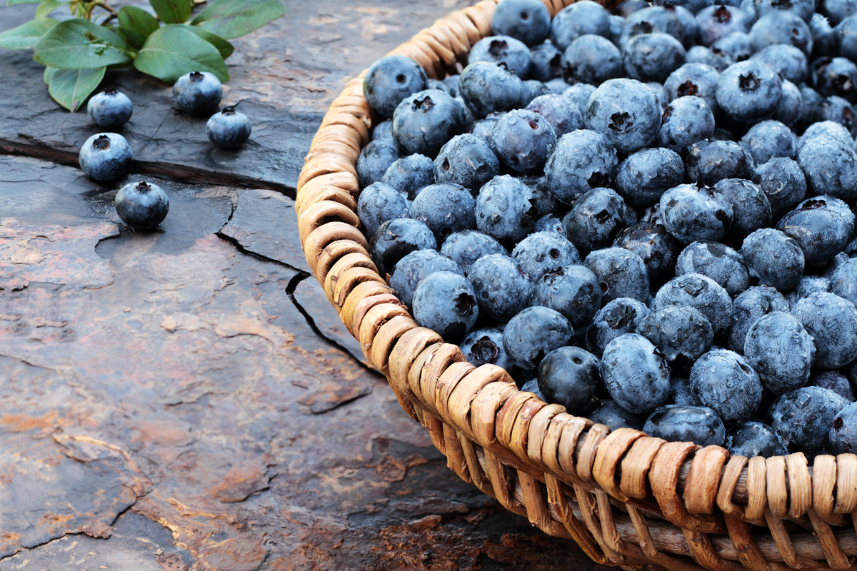 Beautiful Blueberries How They Just Might Change Your Life